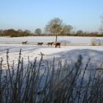 Winter Pastures