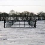 Winter Pastures 2