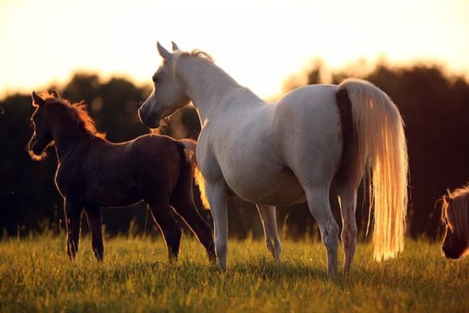 Herde Halima with Hallah