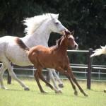 Herd Wanessa with Kaheel