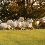 Herd in motion