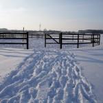 Winter Roundpen
